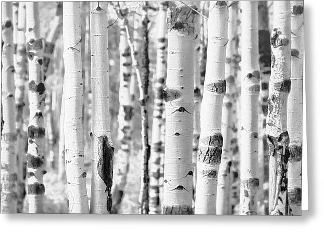 Greeting Card featuring the photograph Aspens In Black And White  by Saija Lehtonen