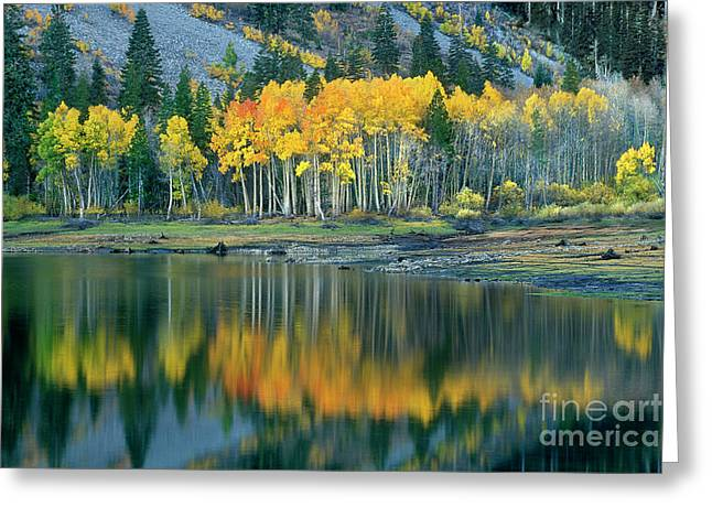 Aspens In Fall Color Along Lundy Lake Eastern Sierras California Greeting Card by Dave Welling