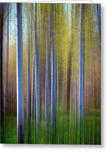 Aspens In Springtime Greeting Card by Rick Berk