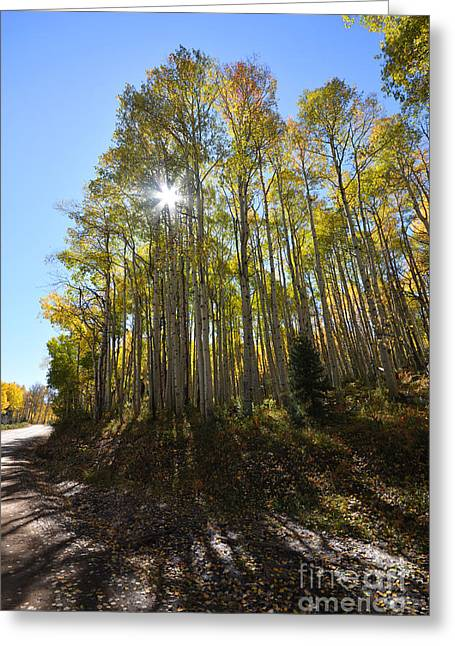 Greeting Card featuring the photograph Aspens In The Fall by Kate Avery