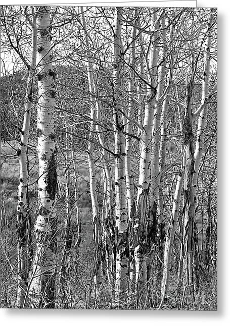 Aspens Greeting Card by Kathy Russell