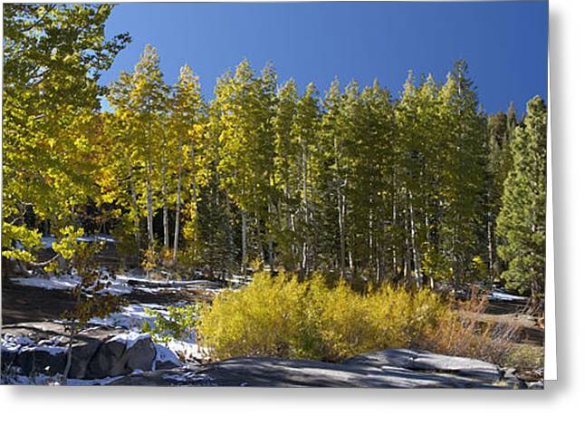 Greeting Card featuring the painting Aspens by Larry Darnell