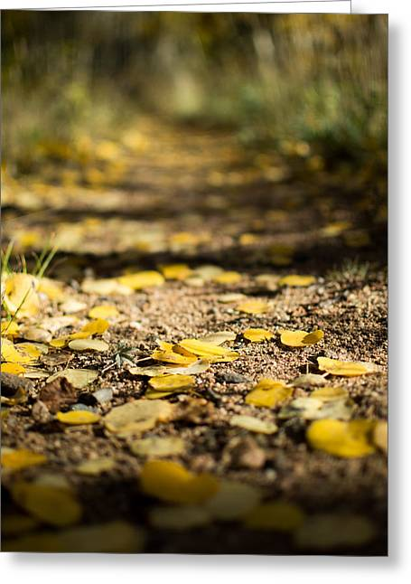 Aspen Leaves On Trail Greeting Card