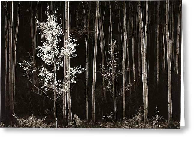 Aspens Northern New Mexico Greeting Card