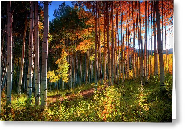 Greeting Card featuring the photograph Aspens Of The West Elk Mountains by John De Bord