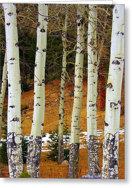 Landscape Pictures Greeting Cards - Aspens of white Greeting Card by Julie Lueders