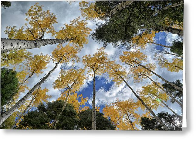 Greeting Card featuring the photograph Aspens Reaching by Kevin Munro