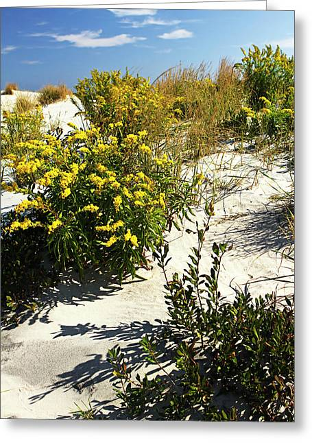 Assateague Beach 5 Greeting Card by Alan Hausenflock