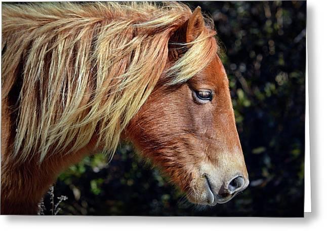 Assateague Horse Sarah's Sweet Tea Right Profile Greeting Card