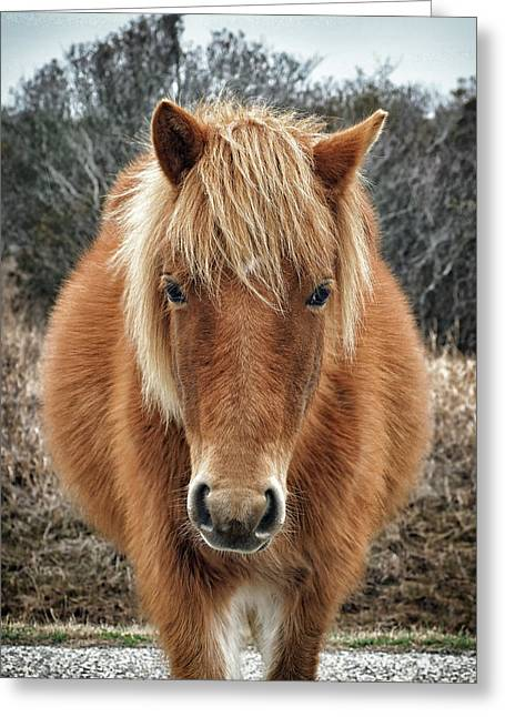 Assateague Island Horse Miekes Noelani Greeting Card