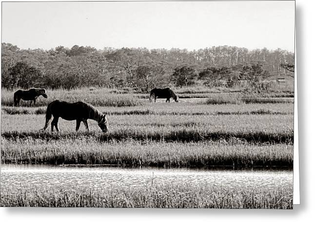 Assateague Greeting Card by Olivier Le Queinec