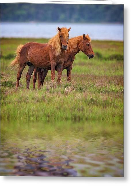 Assateague Ponies In The Marsh Greeting Card