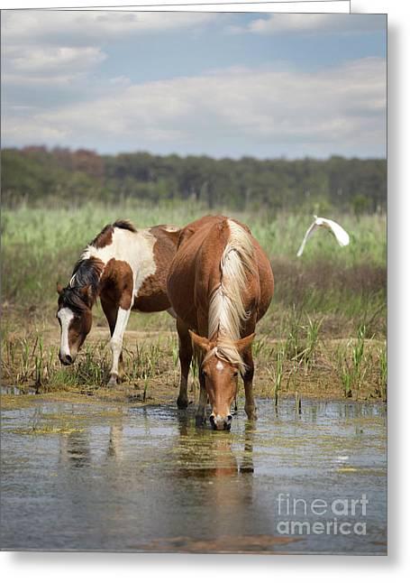 Assateague Pony Pair Greeting Card