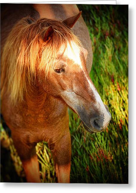 Assateague Summer II Greeting Card by Kathi Isserman