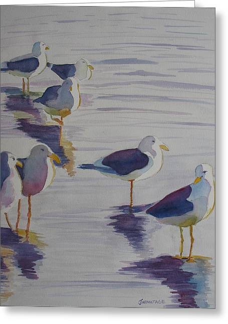 Assorted Gulls Greeting Card by Jenny Armitage