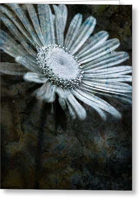 Aster On Rock Greeting Card by  Onyonet  Photo Studios