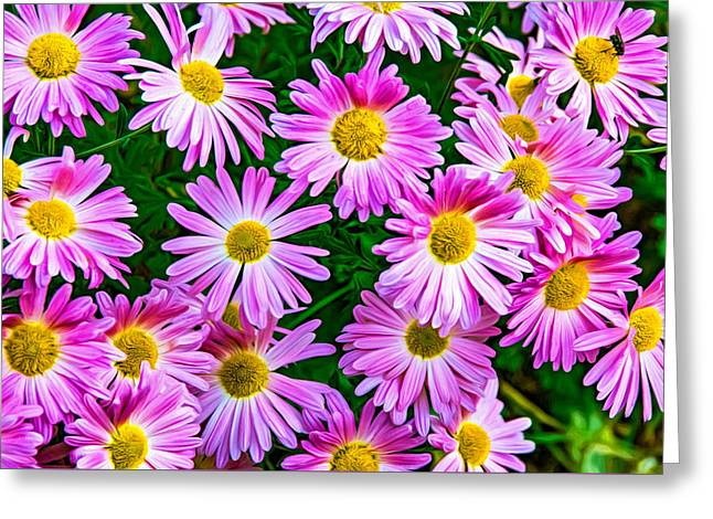 Aster Pest Greeting Card by Steve Harrington