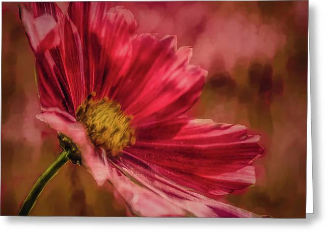 Aster Red Painterly #h1 Greeting Card