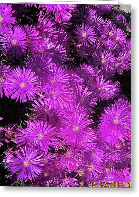 Asters At North Conway Greeting Card by Paul Meinerth