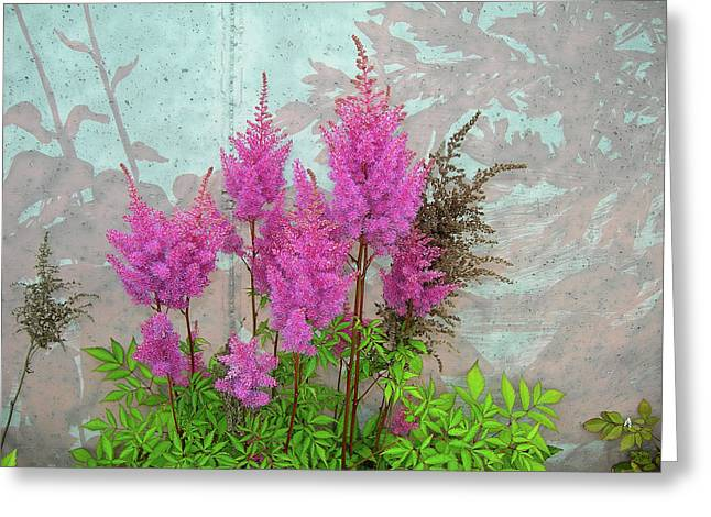 Astilbe And Shadows Greeting Card by Randy Rosenberger