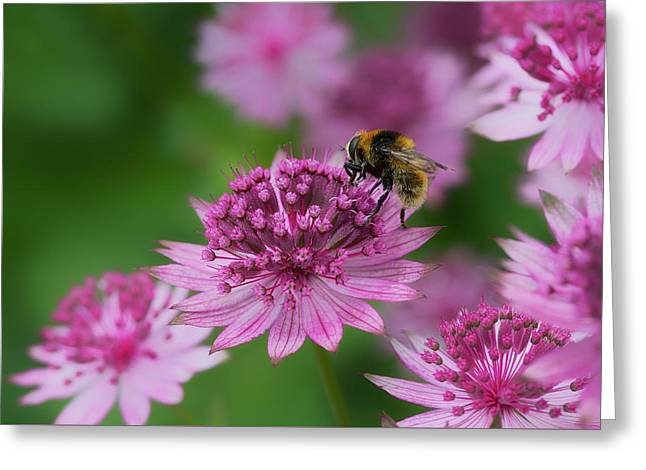 Pollination Greeting Card by Shirley Mitchell