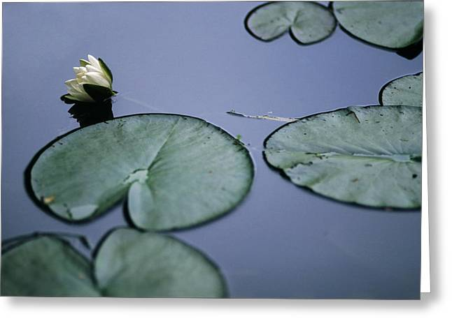 Greeting Card featuring the photograph At Claude Monet's Water Garden 2 by Dubi Roman