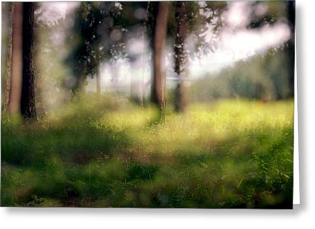 At Menashe Forest Greeting Card