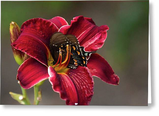 At One With The Orchid Greeting Card