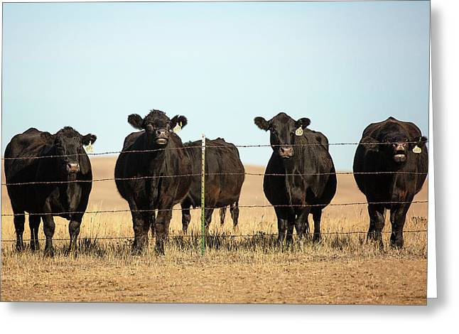 At The Fence Greeting Card by Todd Klassy