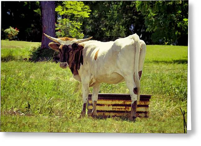 At The Other Water Trough Greeting Card by Jan Amiss Photography