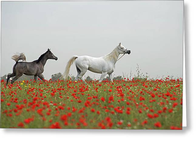 At The Poppies' Field... Greeting Card