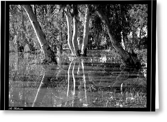 Greeting Card featuring the photograph At The Swamp 2 by Arik Baltinester