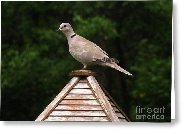 At The Top Of The Bird Feeder Greeting Card by Donna Brown