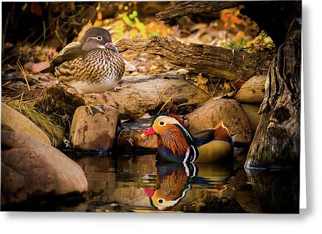 At The Waters Edge - Mandarin Ducks Greeting Card