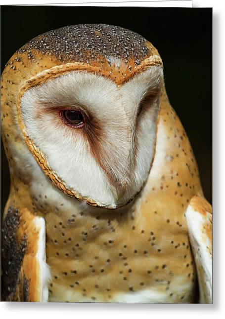 Greeting Card featuring the photograph Athena The Barn Owl by Arthur Dodd