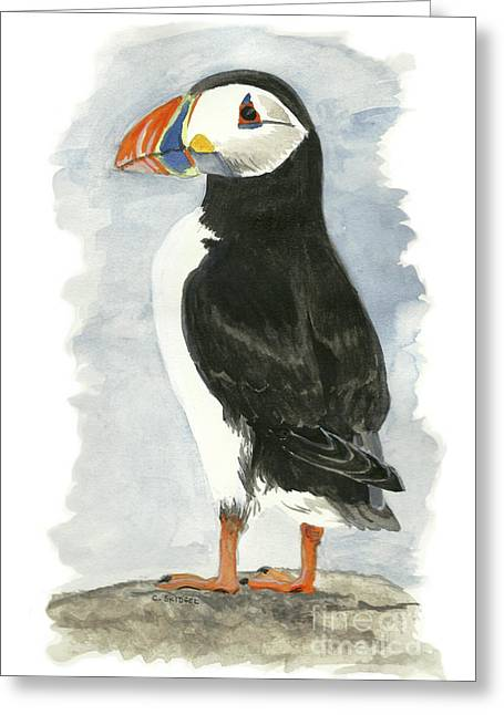 Atlantic Puffin - Watercolor Greeting Card by Cindy Skidgel