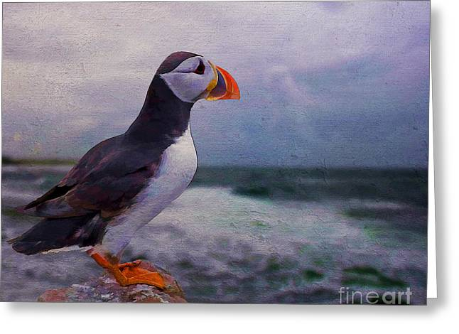 Atlantic Puffin Greeting Card by Jim  Hatch