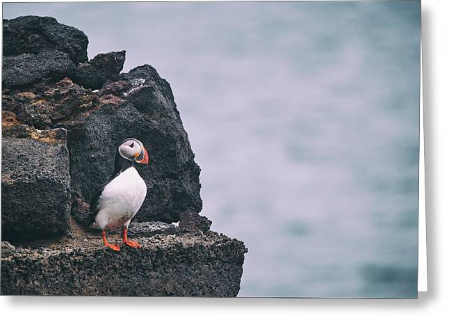 Atlantic Puffin Greeting Card