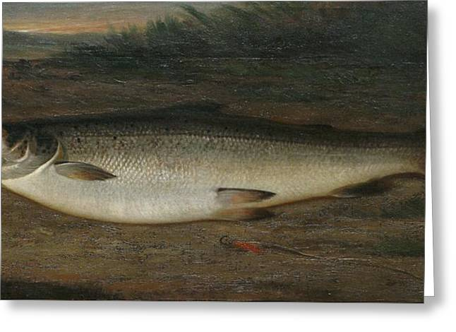 Atlantic Salmon Greeting Card by MotionAge Designs