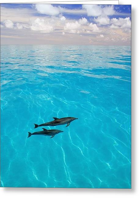 Cetaceans Greeting Cards - Atlantic Spotted Dolphins Greeting Card by Carson Ganci