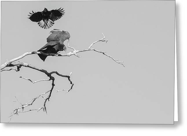 Greeting Card featuring the photograph Attack On A Buzzard by Carolyn Dalessandro