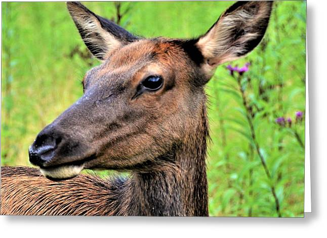 Attentive Yearling Greeting Card