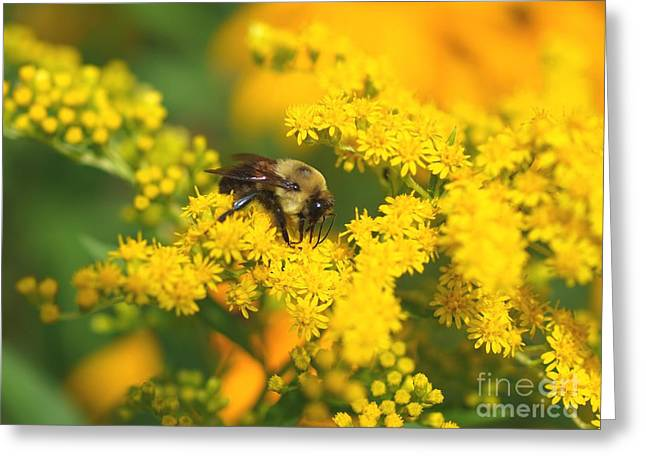 August Bee Greeting Card by Susan  Dimitrakopoulos