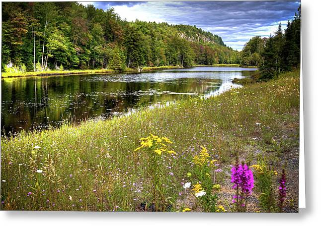 Greeting Card featuring the photograph August Flowers On The Pond by David Patterson