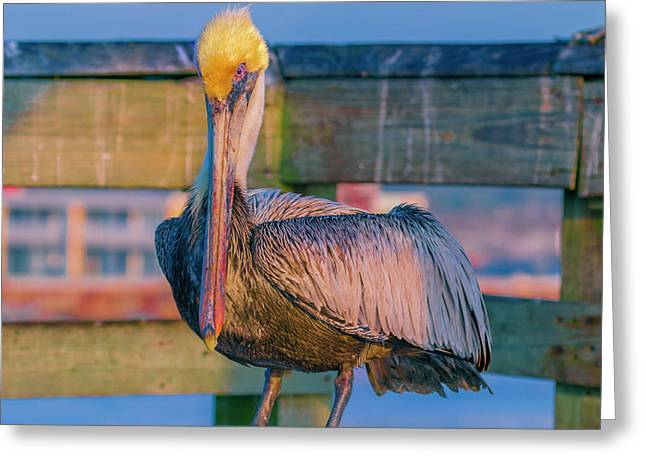 Augustine Pelican Greeting Card by Betsy Knapp