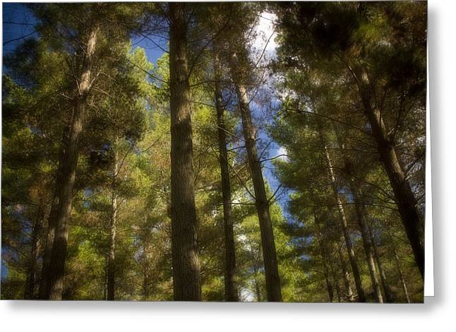 Aupouri Forest Greeting Card by Graham Hughes