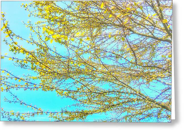 Greeting Card featuring the photograph  Aura Of Springtime by Connie Handscomb