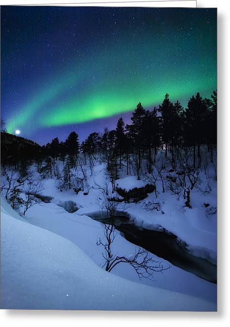 Aurora And A Full Moon Over Tennevik Greeting Card by Arild Heitmann