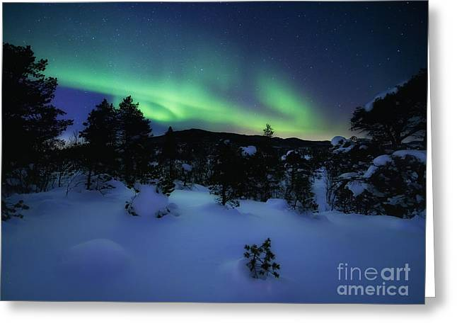 Aurora Borealis Over Forramarka Woods Greeting Card by Arild Heitmann