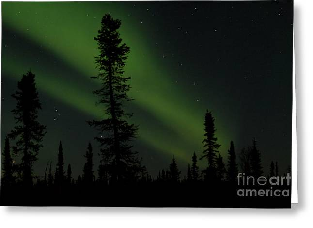 Aurora Borealis The Northern Lights Interior Alaska Greeting Card